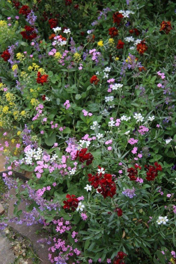 Kvitnúce kvety v záhrade