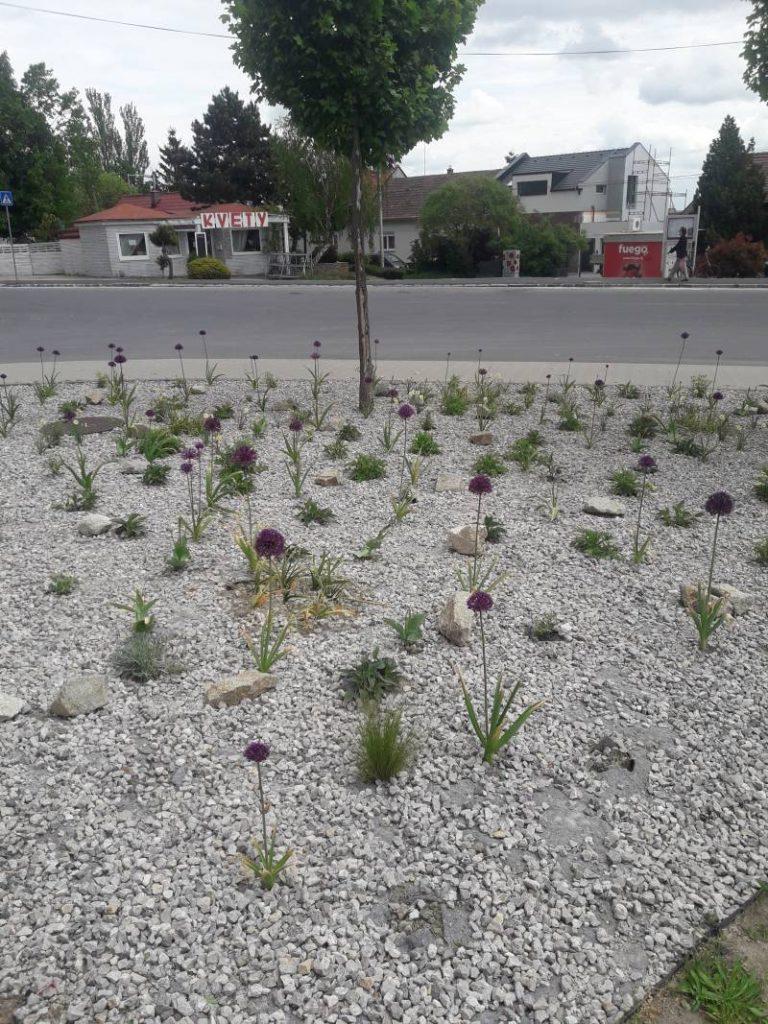 Výsadba zelene v Rači