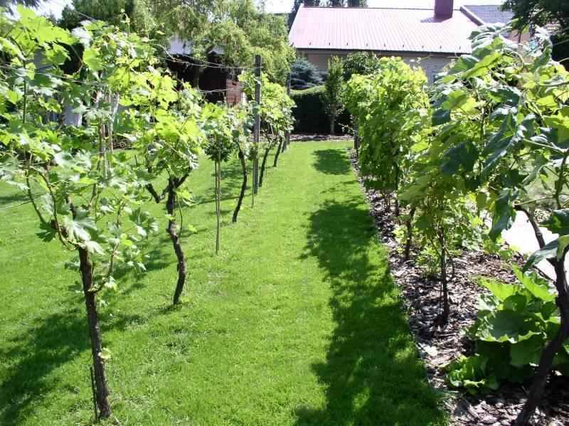 Postup pri realizácia záhrady 05
