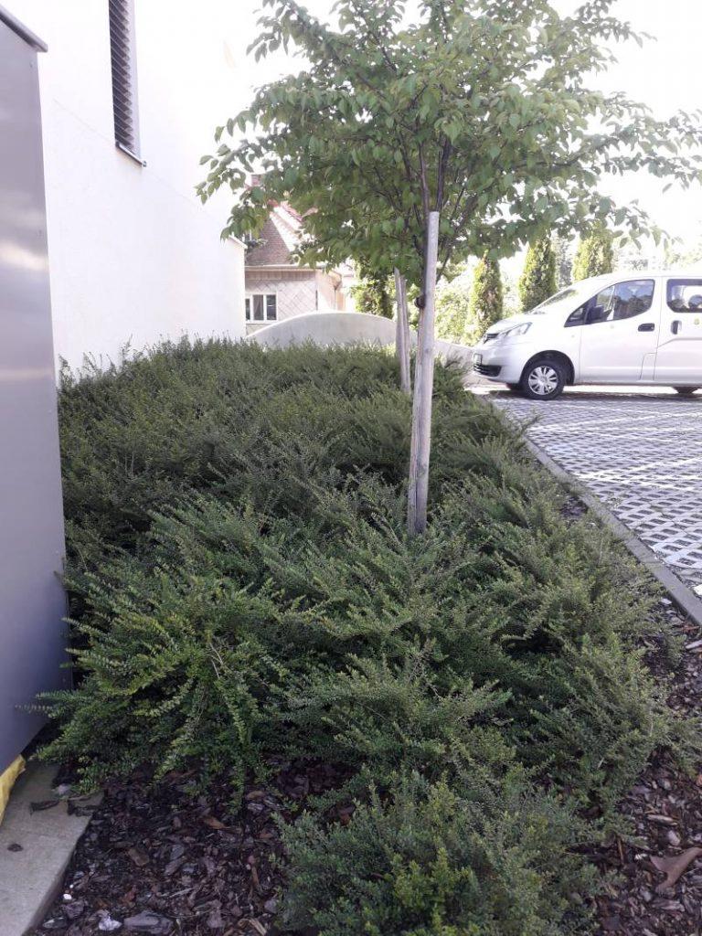 Projekt Sokolská Residence