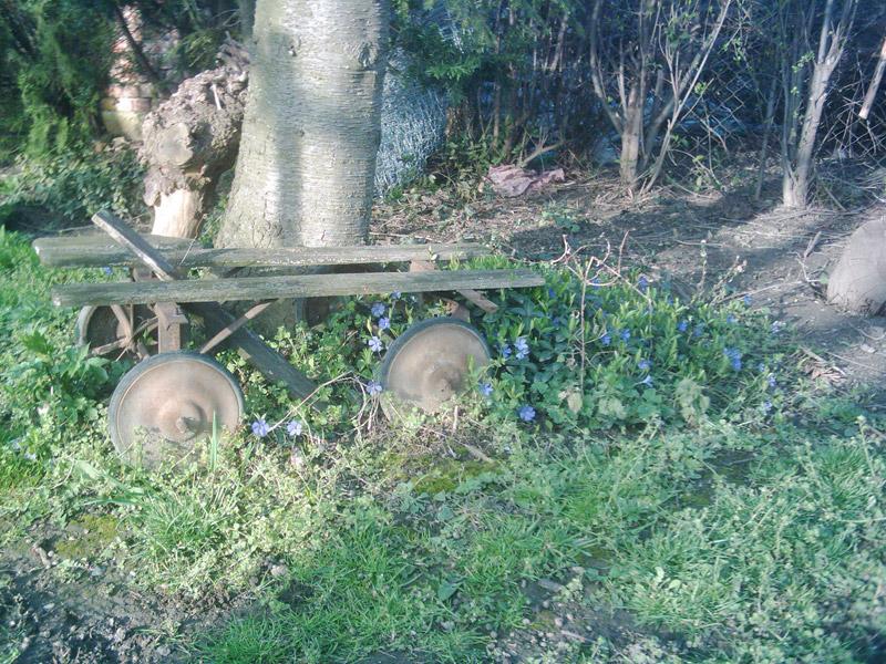 Zátišie v záhrade